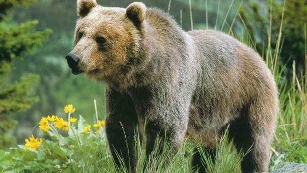 В Аляске во время игры в гольф на поле пришел медведь