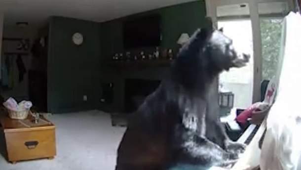 Медведь стал звездой сети