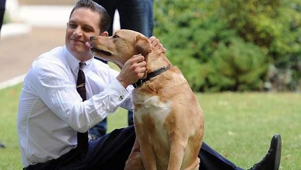 Том Харди с собакой Вуди