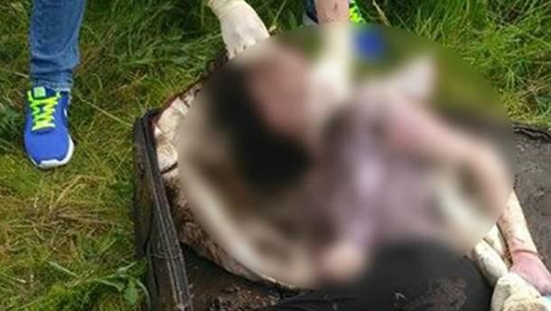 Вбивство студентки на Прикарпатті