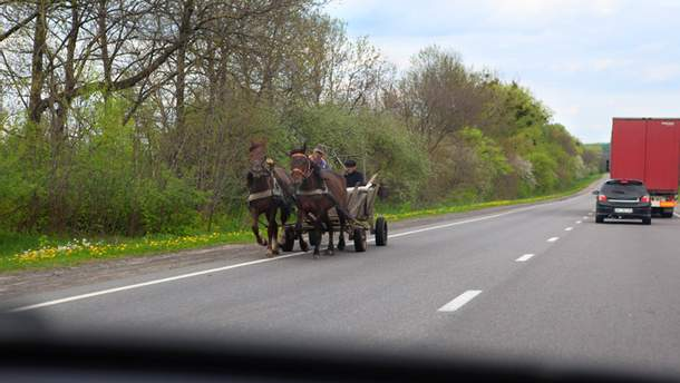 Підвода з кіньми на дорозі