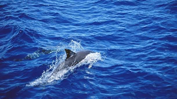 Возле Нидерландов рыбаки поймали двуглавого дельфина