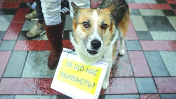 Рада посилила відповідальність за жорстоке поводження з тваринами