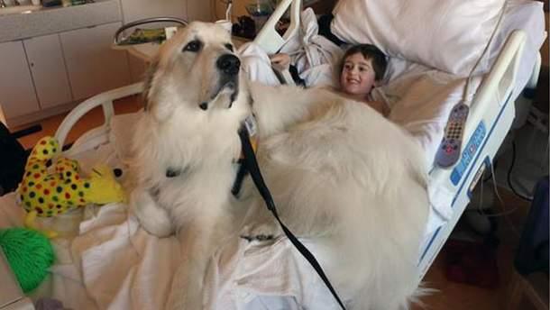 Собаки допомагають хворим