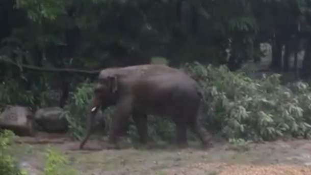 Слон у київському зоопарку