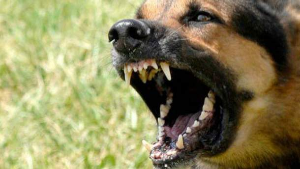 Собака напала на правоохранителей