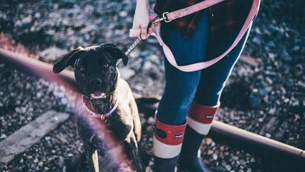 Візьміть собаку з притулку