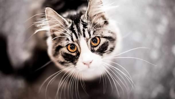 В Одессе выбросили кота из окна