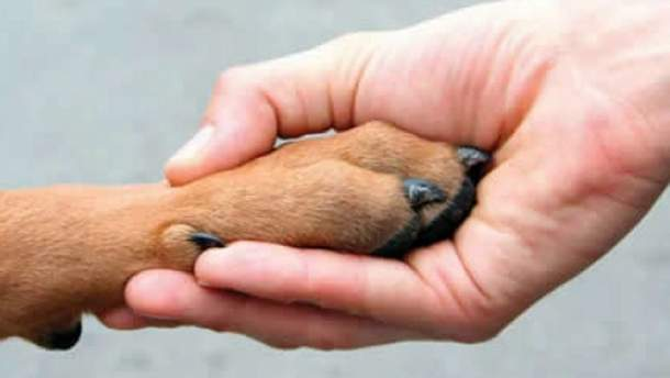 За знущання над тваринами посилено кримінальну відповідальність