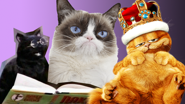 Найвідоміші коти з фільмів