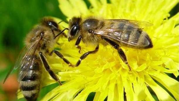 Чоловік помер від укусу бджоли