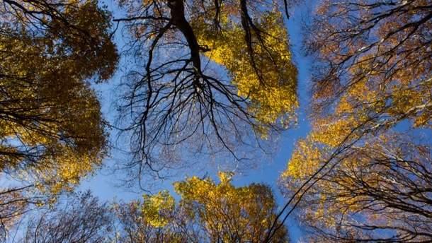 Прогноз погоди в Україні на суботу, 2 вересня