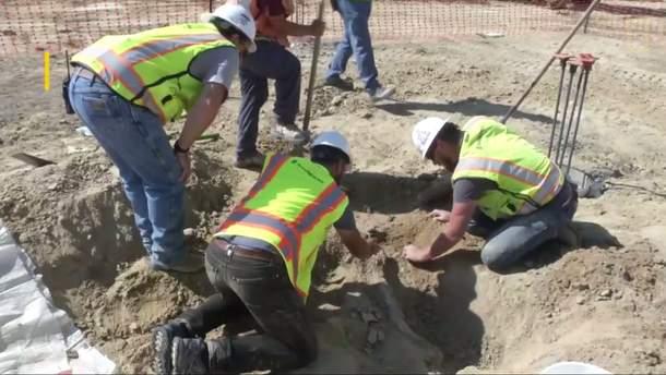 Строители обнаружили останки динозавра