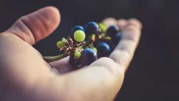 Як вибрати виноград