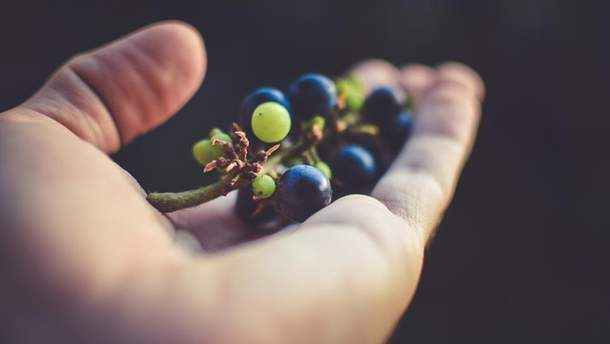 Как выбрать виноград