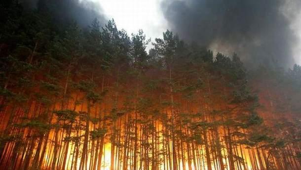 Лесные пожары в США и Канаде