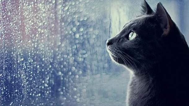 Погода в четверг, 7 сентября, будет облачной и дождливой