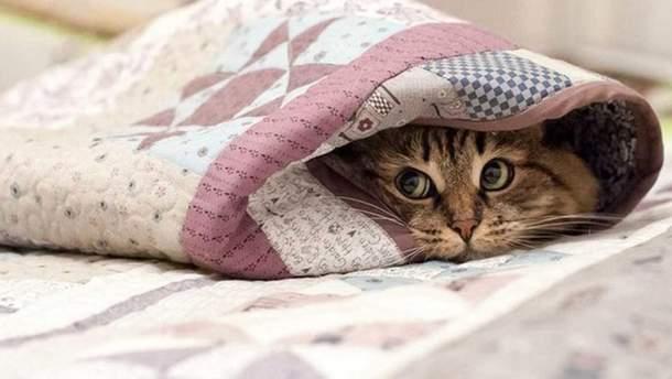 Уночі проти 7 вересня у Києві температура опуститься до +7 градусів