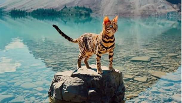 Кошка Суки