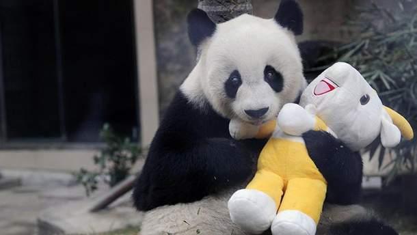 Умерла самая старая панда Басы