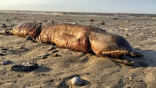 Вчені розпізнали страхітливу істоту, яку викинуло на берег США