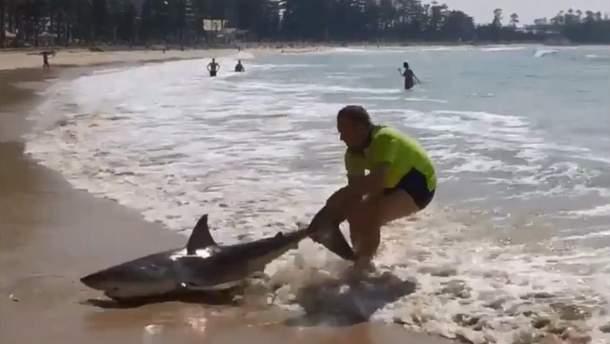 Карл Бухольц оттягивает акулу в океан