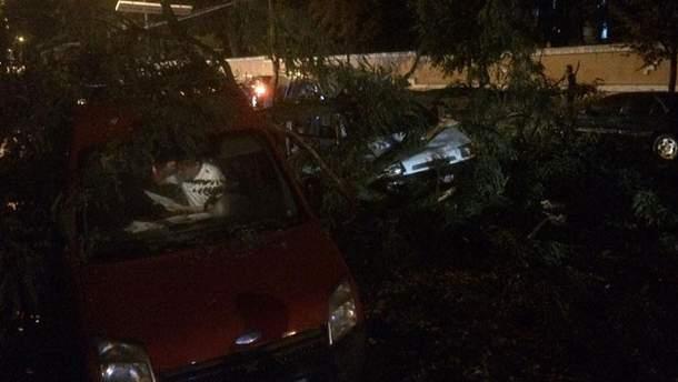 Шквальный ветер поломал деревья в Черновцах