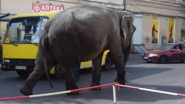Слон в Одессе