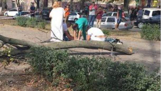 Дерево убило девушку в Днепре