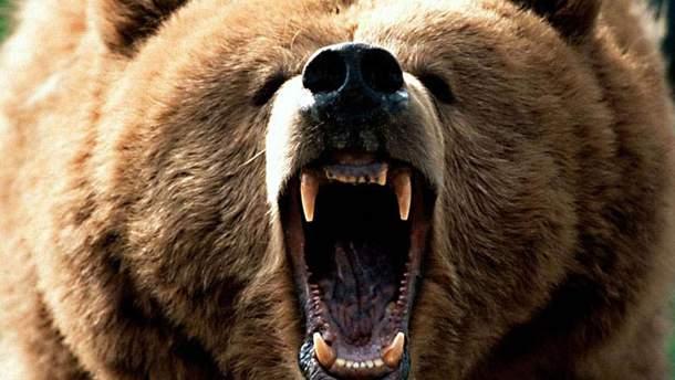 Жертвою ведмедя став 6-літній хлопчик