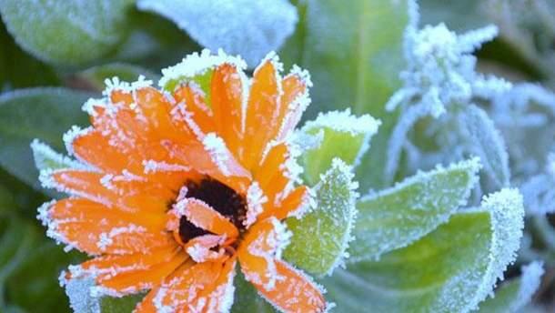 Украину накроют первые заморозки