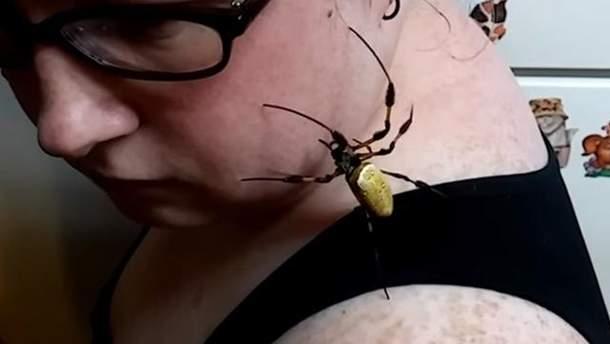 Величезний павук полазив по жінці