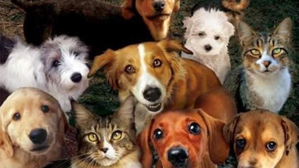 Депутати заборонили домашнім тваринам гавкати