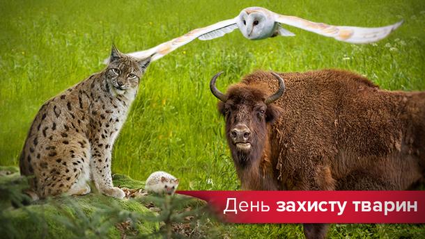 День захисту тварин 2019 — фото тварин України які вимирають