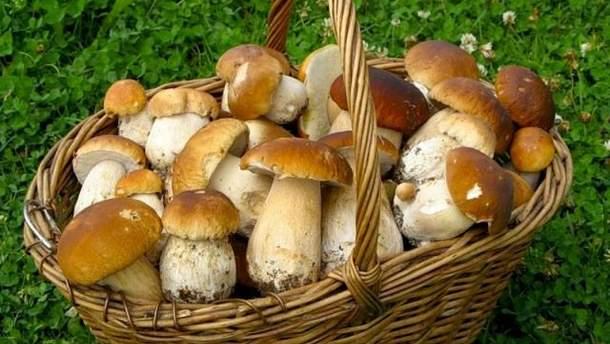 На Львівщині юнак пішов по гриби і замерз насмерть
