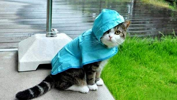 Погода у четвер, 5 жовтня, в Україні буде дощовою
