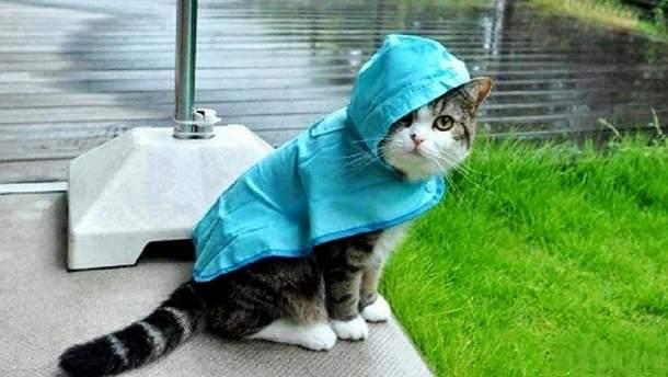 Погода в четверг, 5 октября, в Украине будет дождливой