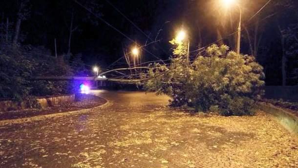 Буревій у Львові поламав дерева