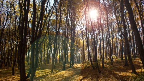 Прогноз погоди в Україні на понеділок, 9 жовтня