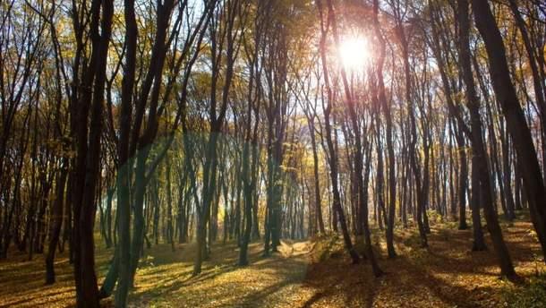Прогноз погоды в Украине на понедельник, 9 октября