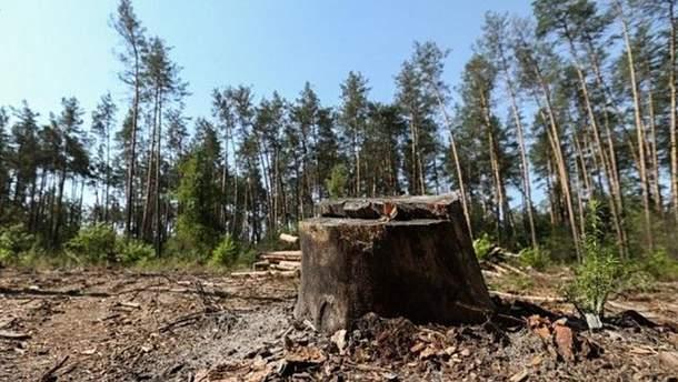 Окупаційна влада Севастополя планує знищити тисячі зелених насаджень
