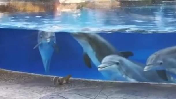 Дельфины наблюдают за белочками