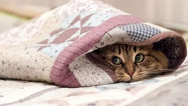 На выходные, 14-15 октября, в Украине ощутимо похолодает