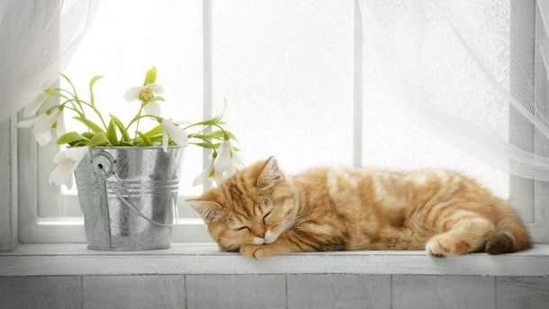 Как побороть стресс, изменив интерьер в доме: 5 способов