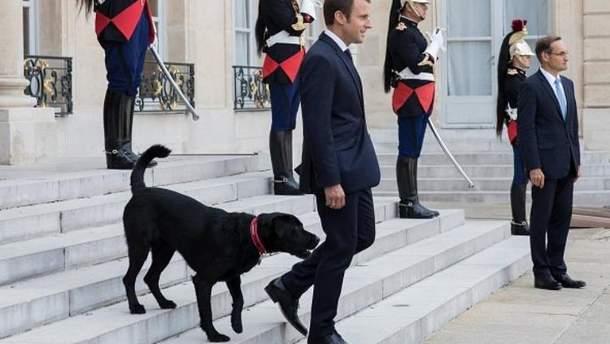 Пёс  Макрона справил нужду на встрече с министрами