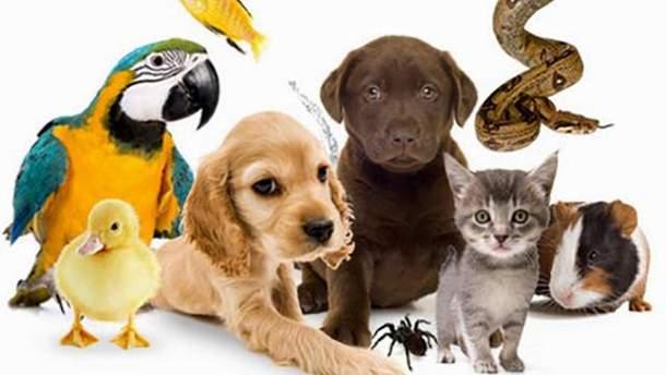 Регистрация домашних животных может стать обязательной в Украине