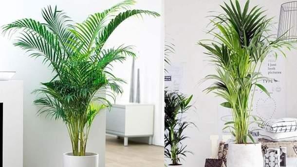 Які рослини очищують повітря