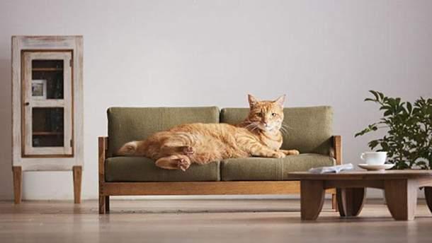 Меблі для котів