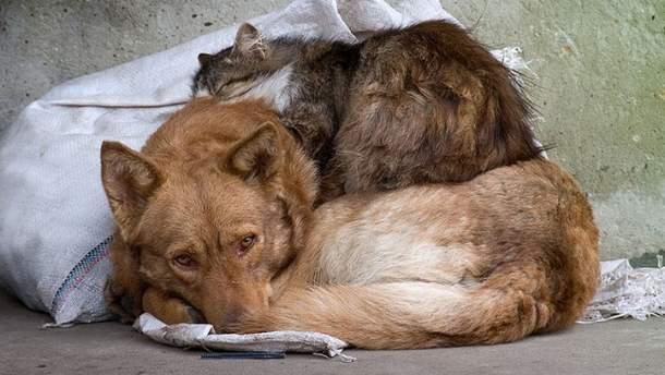 Налог на кошек и собак