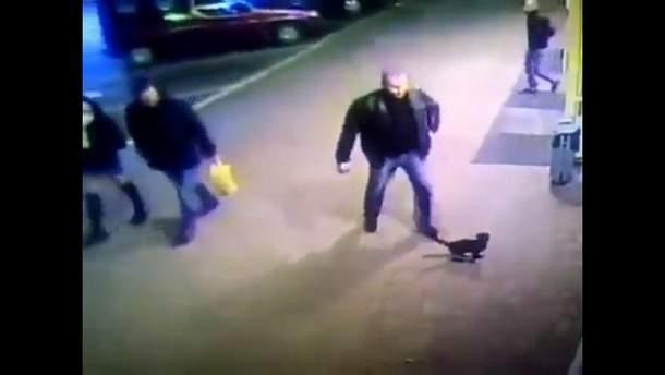 Білоруського міліціонера органів внутрішніх справ звільнили за те, що він копнув кошеня